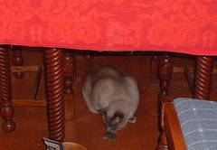 mojo mouse2