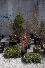 Nursery Stock, Gowanus Nursery