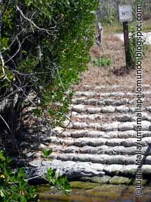 Everglades 2©