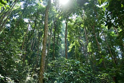 Forest Sun Beams
