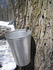 maple syrup - sirop d'érable