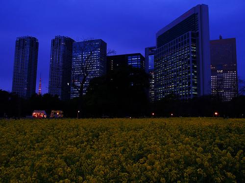 都会の菜の花畑
