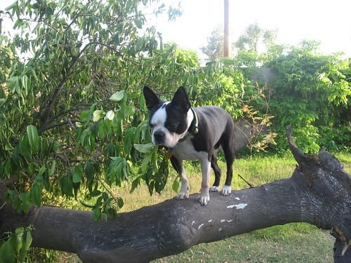 tanner tree