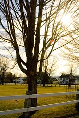 Tree on the Green