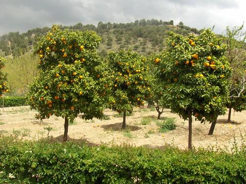 las naranjas del Alhambra