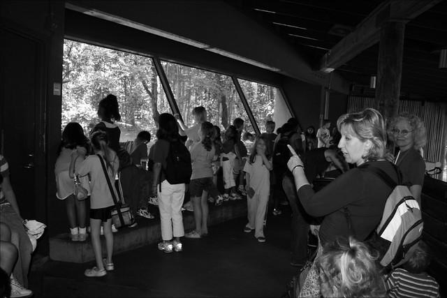 Atlanta Zoo Tiger Exhibit