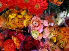 Bunches (viviloob) Tags: pink flowers red orange plants white plant flower color colour green nature floral flora natural bunch bunches utata:project=tw55