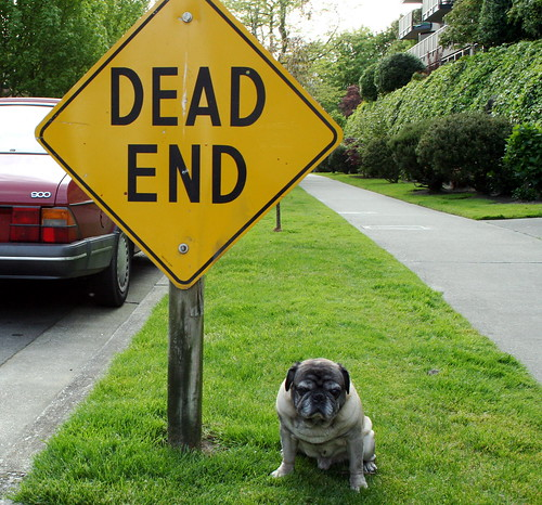 Roscoe with Dead End Sign