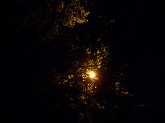 The light background behind a tree. (mystery 20000) Tags: night tree light leaves skynight shining branches brightlight outside outdoor darksky samsunges28
