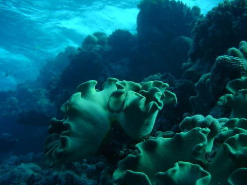 Big, big underwater flowers