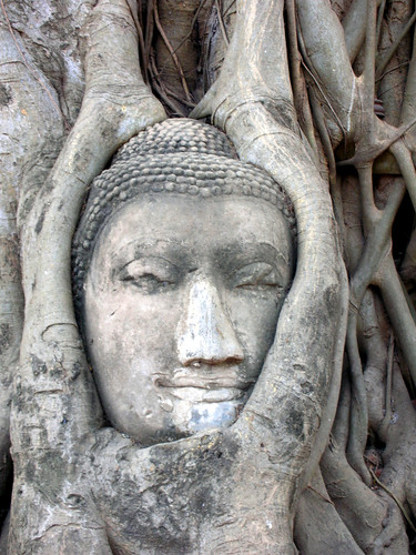 Buddha Head at Wat Phra Mahathat temple