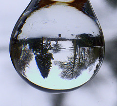 Snowy refraction of the garden (algo) Tags: snow reflection beautiful garden photography topf50 bravo topv1111 topv999 topv5555 refraction topf100 ricoh halton magicdonkey outstandingshots abigfave creativeshotinvited 200750plusfaves superbmasterpiece caplio4