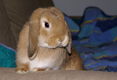 Handsome Boef (Sjaek) Tags: pet cute rabbit bunny animal furry sony adorable handsome fluffy hay alpha a100 boef