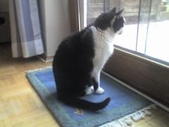 Gast-Katze Filou: Wieder da