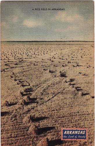 """Arkansas """"Land of Beauty"""" Rice Field"""
