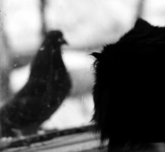 Curiosity (bigwhitefish) Tags: new trip travel winter bw bird art film nature animals cat europe explore flickrsbest bestofcats impressedbeauty kittyschoice bigwhitefish diamondclassphotographer flickrdiamond theunforgettablepictures