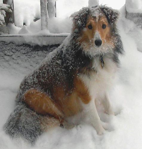 snowytoons