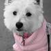 子犬:Pretty in pink