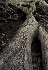 Understanding conflict's roots