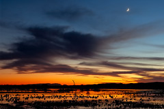 Thankful (Fort Photo) Tags: blue sunset moon newmexico bird nature birds animal landscape geese bravo searchthebest quality wildlife birding cranes ave nm ornithology soe bosquedelapache avian 2007 sandhillcrane snowgeese naturesfinest blueribbonwinner magicdonkey 100faves 50faves instantfave outstandingshots specland abigfave flickrgold anawesomeshot colorphotoaward impressedbeauty flickrplatinum irresistiblebeauty superbmasterpiece flickrdiamond 50kcelebrationpost