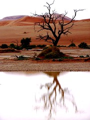 Dead Tree - Sossusvlei (geoftheref) Tags: africa travel trees plants plant reflection tree green nature water de landscape dead la interestingness interesting sand flickr desert south dune paisaje paisagem il safari afrika paysage landschaft namibia paesaggio landschap sossusvlei namib  frica namibie lafrique namibi  geoftheref nambia dellafrica  afrikasafari