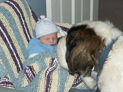 Dog Staring at Baby