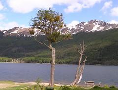 Ruta Lago Fagnano y Lago Escondido Argentina 103 (Rafael Gomez - http://micamara.es) Tags: lago fagnano y escondido patagonia argentina argentine argentinien isla grande de tierra del fuego ruta mirador senderismo excursion
