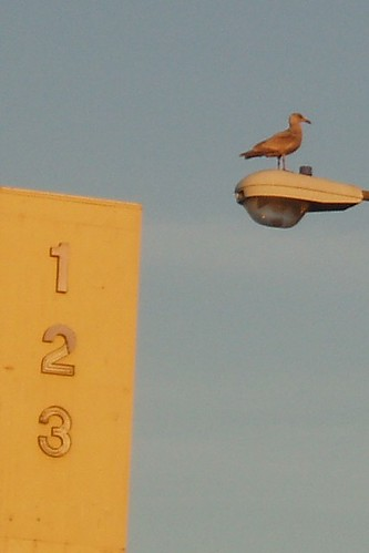 1-2-3 Seagull