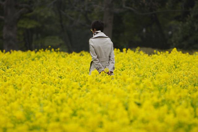 まばゆい黄色