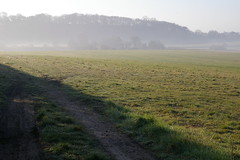 Near Tring (P and H) Tags: mist field tring