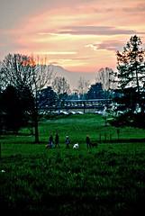 gli amici del parco (met.e.o.r.a) Tags: parco torino cielo giardini colletta ilcielosutorino
