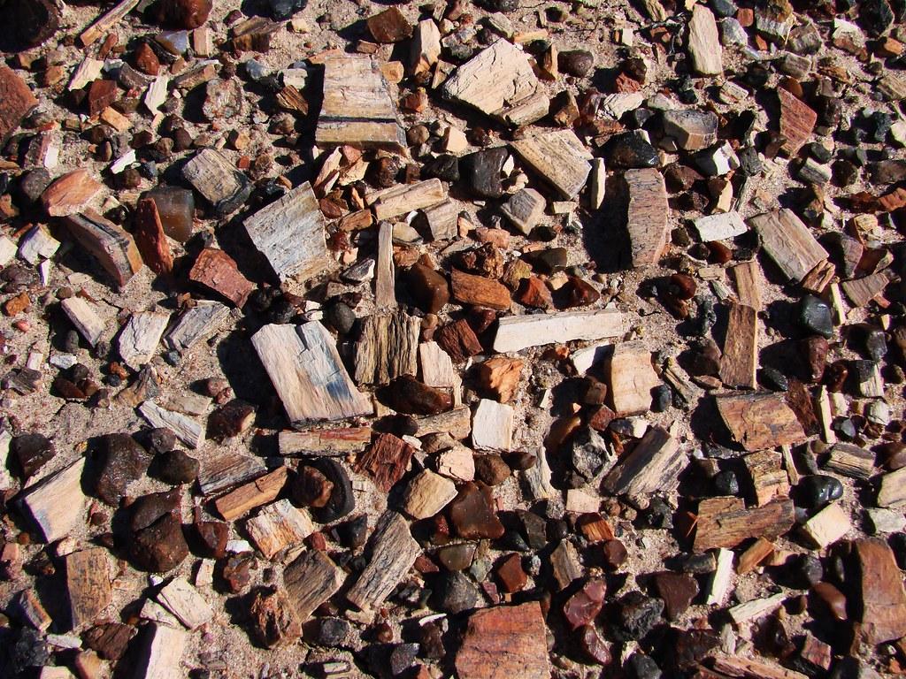 petrified wood gravel