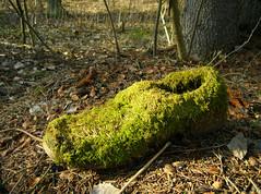 Elf's shoe ? ([ Petri ]) Tags: sunlight forest finland shoe moss spring elf wowiekazowie winnerbc