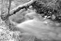Dry-Creek-B-&-W (z.tylerd) Tags: efs1855 digitalrebelxti