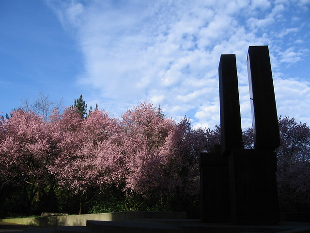 rusting chunks & cherry blossoms