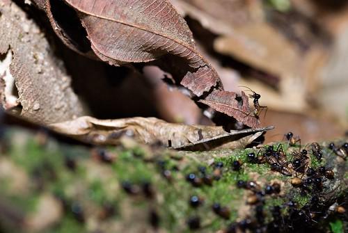 Termite Highway