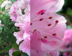 Wednesday Pink