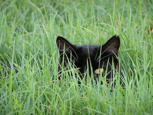 Hidden Cat by Grahford.