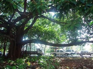 Yup, same tree.