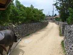 Tagesausflug auf die Insel Taketomi (Okinawa) (Alex_Mueller) Tags: japan okinawa taketomi flitterwochen