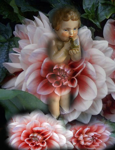 flowerfairyboy