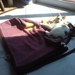 Taking a Sun bath, fighting with the blanket thumbnail