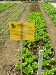 Soil Born Farm: Organically Grown