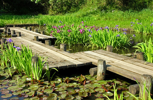 Iris pond and Eight briges