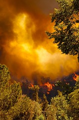 Fire in Griffith Park (Danny Perez Photography) Tags: california park ca plants mountain plant love nature d50 fire losangeles nikon hills burn disaster nikkor griffithpark brushfire 70200mm 70200mmf28gvr dannyperez abigfave da100fotos wildlifeindanger dannyperezphotography
