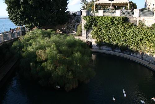 Fontana Aretusa