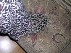 Leoparder liten
