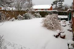 Snow Feb 07 015