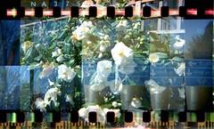 Holga Picture (Michael Hayes2007) Tags: 35mm holga lomo multipleexposures