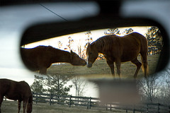 Rear View Kiss (nailbender) Tags: horses horse reflection ilovenature mirror farm quality alabama blountcounty nailbender jdmckinnon